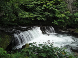 Sakura Falls