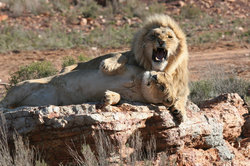 Aquila Private Game Reserve - Day Trip Safari