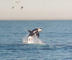 Chris' Fishing Trips & Whale Watching