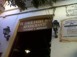 El Gavilan Del Mar
