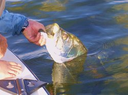 Pesca Mahahual