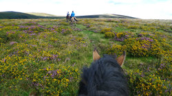 Dartmoor Riding and Trekking