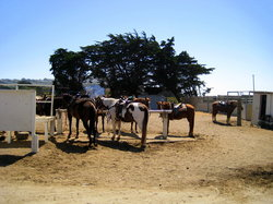 Mar Vista Stables