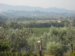 Veduta Duomo Arezzo
