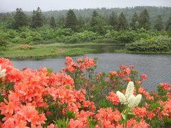 Suiren Pond