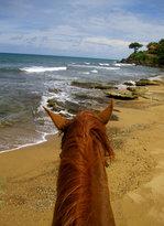 Horseback Rides by Pintos R Us