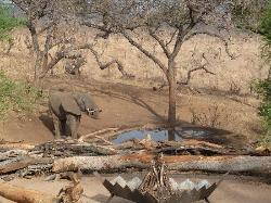 elephant at the watering hole