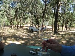 Heibel Ranch Vineyards