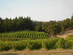 Ankeny Vineyard