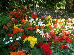 Parc Floral et Tropical de la Court d'Aron