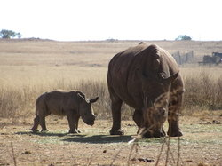 Lion and Rhino Nature Reserve
