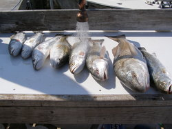 Everglades Fishing Charters