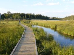 The Beaver Boardwalk