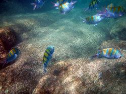 Cabo Pulmo Dive Center