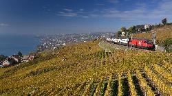 Trains and vines near Lausanne