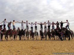 Egypt Horse Tours