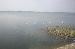 Gandipet Lake