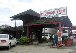 World's Largest Redwood Tree Service Station