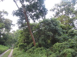 Chilapata Wildlife Sanctuary