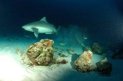 Deep Life Divers