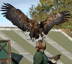 Falconry UK Thirsk Birds of Prey Centre