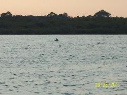 Pic of a dolphin swimming by the restaurant