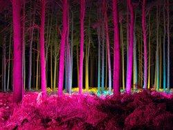 Thetford Forest Park