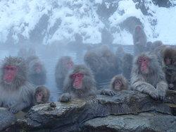 地狱谷雪猴公园