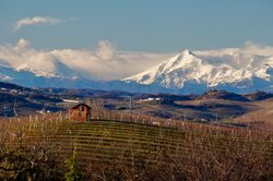 Travel Langhe  Wine Tours