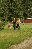Starr Alpaca Farm