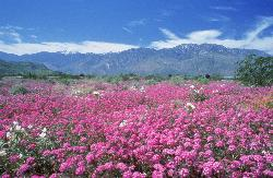 Wildflowers Bloom in the Spring (37483091)