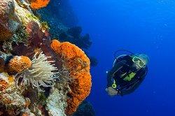 SeaPro Divers