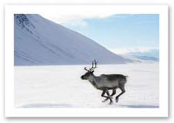 Lapland Safaris - Rovaniemi