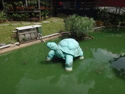 乌龟和鳖展览馆