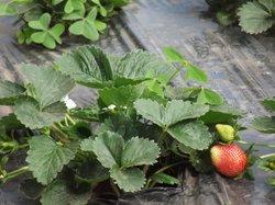 Mapro Garden