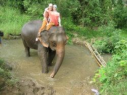 Jumbo Elephant Camp Day Tour