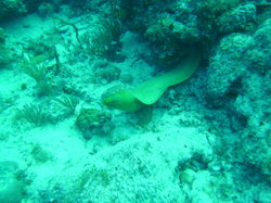 Green Moray International Dive Center