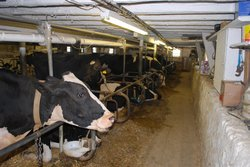 Hinchley's Dairy Farm Tours