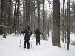Windblown Cross Country Skiing and Snowshoeing