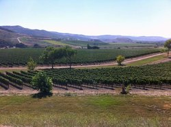 Stagecoach Wine Tours Santa Ynez
