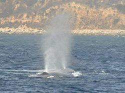 Redondo Beach Whale Watch