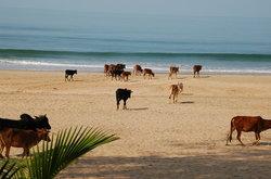 阿贡达海滩