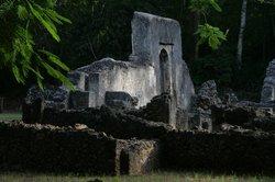 Arabuko-Sokoke Forest