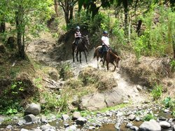Horse Trek Monteverde - Horseback Riding in Costa Rica