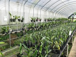 96 Orchid Garden