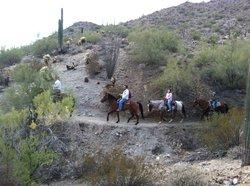 Silver Rein Horsemanship - Day Tours