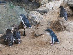 Penguin Centre