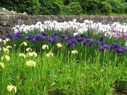 Banshu Yamasaki Hana Iris Garden