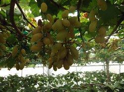 Taman Anggur Perlis