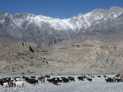 Adventure Great Himalaya - Private Day Tours